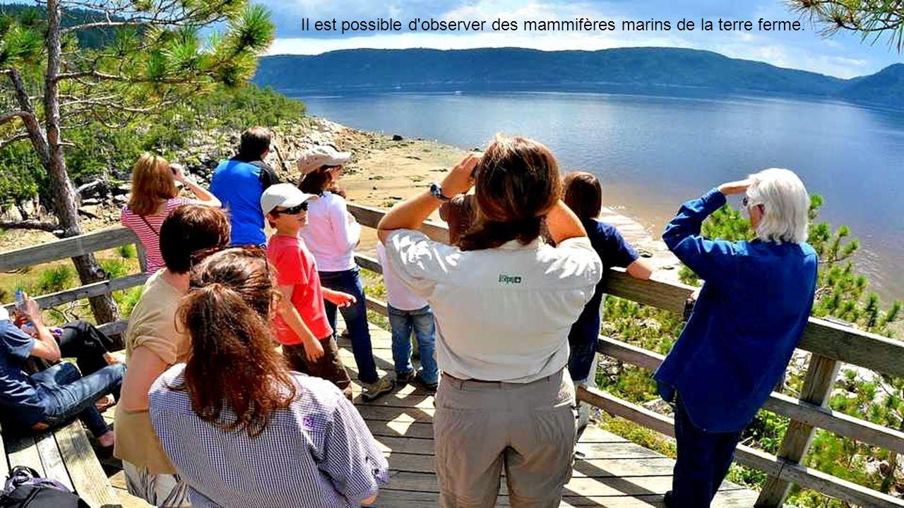 Il est possible d observer des mammifères marins de la terre ferme.