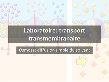 Laboratoire: transport transmembranaire Osmose: diffusion simple du solvant.