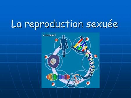 La reproduction sexuée. La Reproduction des Cellules Il y a deux types de reproduction: La reproduction asexuée La reproduction asexuée La reproduction.