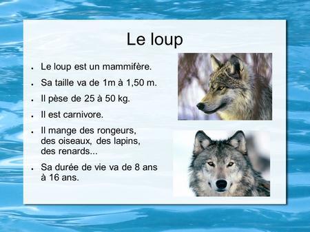 Le loup Loup blanc Loup gris. - ppt video online télécharger