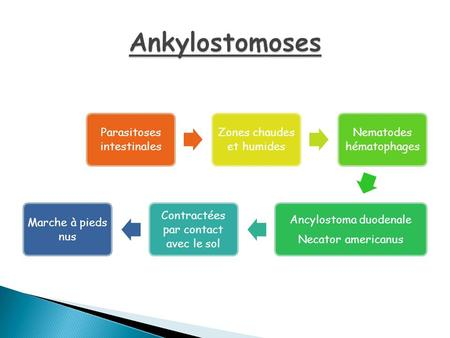 Ankylostomoses Parasitoses intestinales Zones chaudes et humides