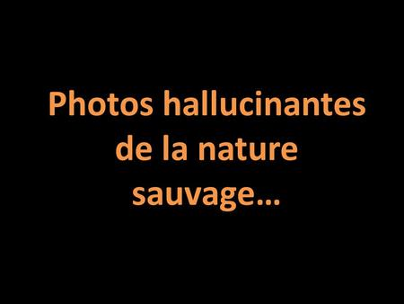 Photos hallucinantes de la nature sauvage….