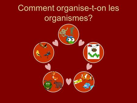 Comment organise-t-on les organismes?