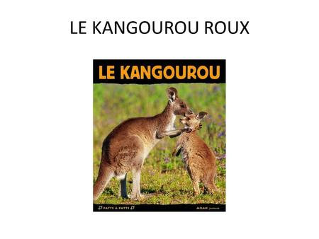 LE KANGOUROU ROUX. PLAN N°1 : Description N°2 : Alimentation N°3 : Déplacements N°4 : La reproduction.