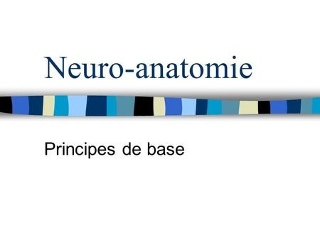 Neuro-anatomie Principes de base.
