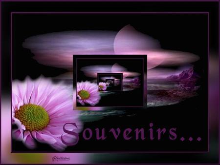 Résultats de recherche d'images pour «petites larmes violets»