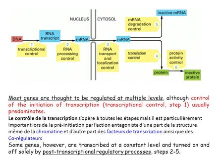 Most genes are thought to be regulated at multiple levels, although control of the initiation of transcription (transcriptional control, step 1) usually.