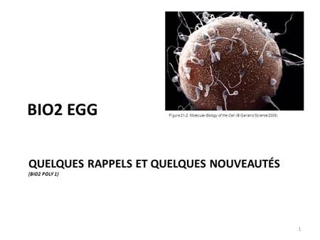 QUELQUES RAPPELS ET QUELQUES NOUVEAUTÉS (BIO2 POLY 1) BIO2 EGG Figure 21-2 Molecular Biology of the Cell (© Garland Science 2008) 1.
