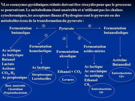 métabolites issus de la transformation du pyruvate :