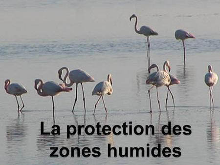 Introduction Tout au long de cet exposé, il sagira de démontrer limportance des zones humides à travers leurs enjeux et la solution internationale adoptée.