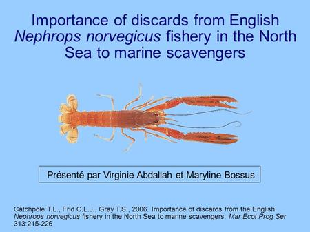 Importance of discards from English Nephrops norvegicus fishery in the North Sea to marine scavengers Catchpole T.L., Frid C.L.J., Gray T.S., 2006. Importance.