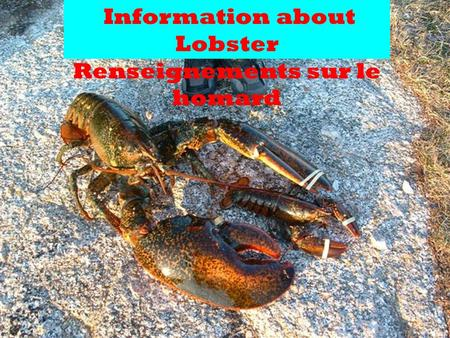 Information about Lobster Renseignements sur le homard