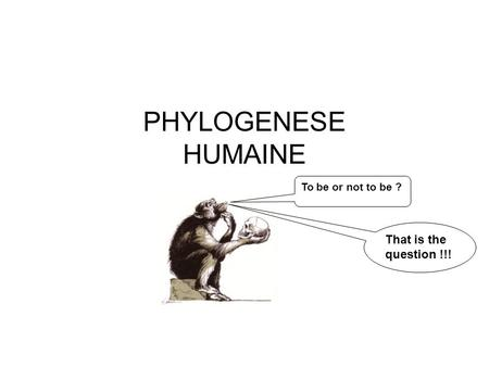 To be or not to be ? That is the question !!! PHYLOGENESE HUMAINE.