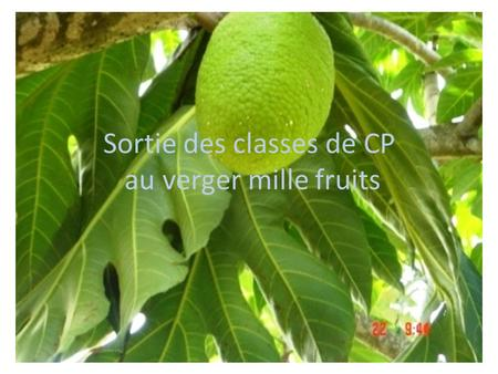Sortie des classes de CP au verger mille fruits