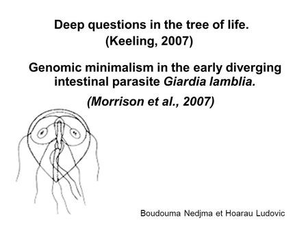 Genomic minimalism in the early diverging intestinal parasite Giardia lamblia. Deep questions in the tree of life. (Keeling, 2007) (Morrison et al., 2007)