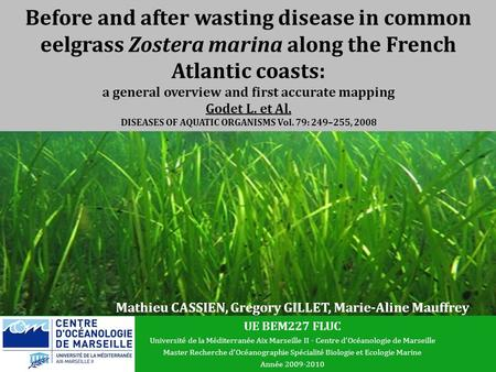 Before and after wasting disease in common eelgrass Zostera marina along the French Atlantic coasts: a general overview and first accurate mapping Godet.