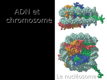 1 Le nucléosome ADN et chromosome. 2 Solomon,D 2004, Nat cell Biol : Heterochromatic domains in a mouse nucleus Dimethylated Lys 9 of Histone H3 is shown.