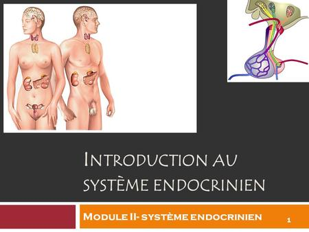 Introduction au système endocrinien