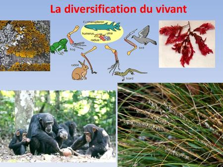 La diversification du vivant