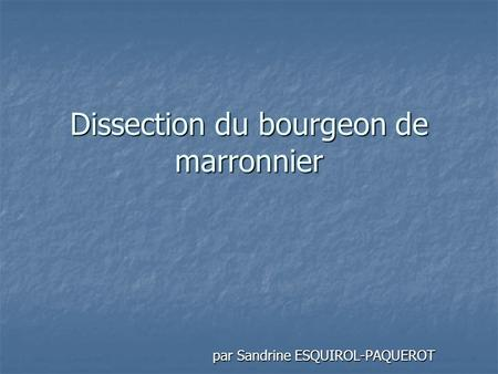Dissection du bourgeon de marronnier