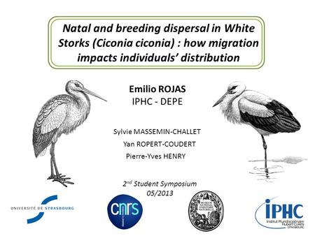 Natal and breeding dispersal in White Storks (Ciconia ciconia) : how migration impacts individuals' distribution Emilio ROJAS IPHC - DEPE Sylvie MASSEMIN-CHALLET.