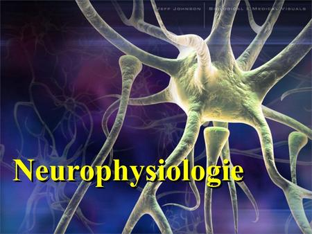 Neurophysiologie.