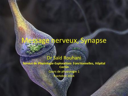 Message nerveux, Synapse