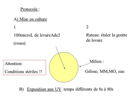 Protocole : A) Mise en culture 1 100microL de levureAde2 (roses) 2 Rateau: étaler la goutte de levure Attention: Conditions stériles !! Milieu : Gélose,