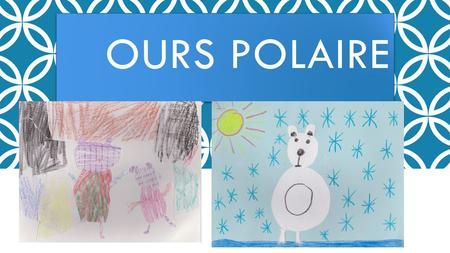 Ours polaire.