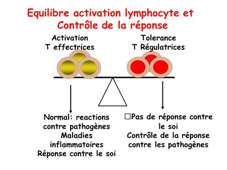 Activation T effectrices Normal: reactions contre pathogènes Maladies inflammatoires Réponse contre le soi Tolerance T Régulatrices Pas de réponse contre.