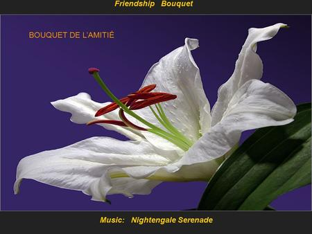 Music: Nightengale Serenade Friendship Bouquet BOUQUET DE L'AMITIÉ.