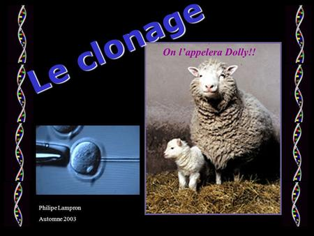 Le clonage On l'appelera Dolly!! Philipe Lampron Automne 2003.