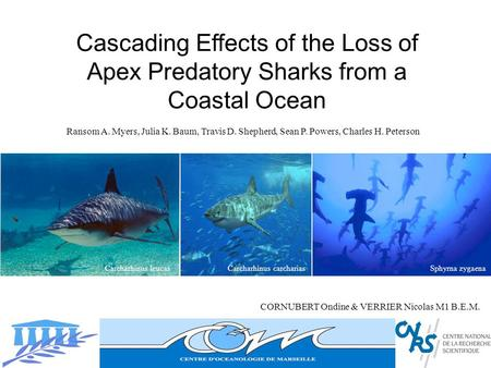 Cascading Effects of the Loss of Apex Predatory Sharks from a Coastal Ocean CORNUBERT Ondine & VERRIER Nicolas M1 B.E.M. Ransom A. Myers, Julia K. Baum,