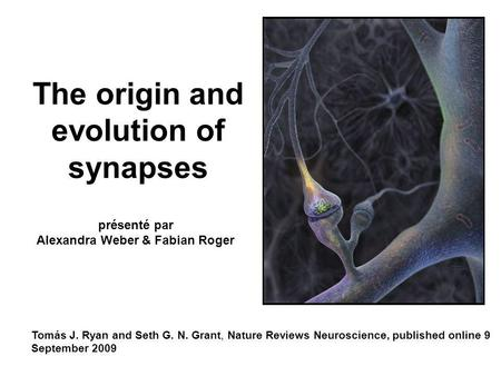 The origin and evolution of synapses