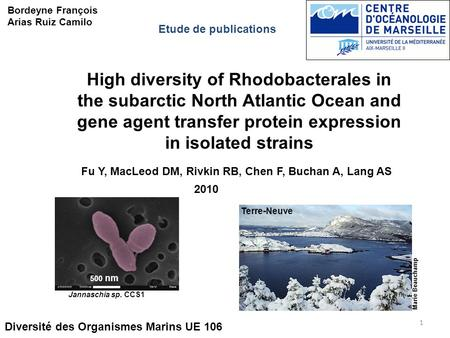High diversity of Rhodobacterales in the subarctic North Atlantic Ocean and gene agent transfer protein expression in isolated strains Diversité des Organismes.