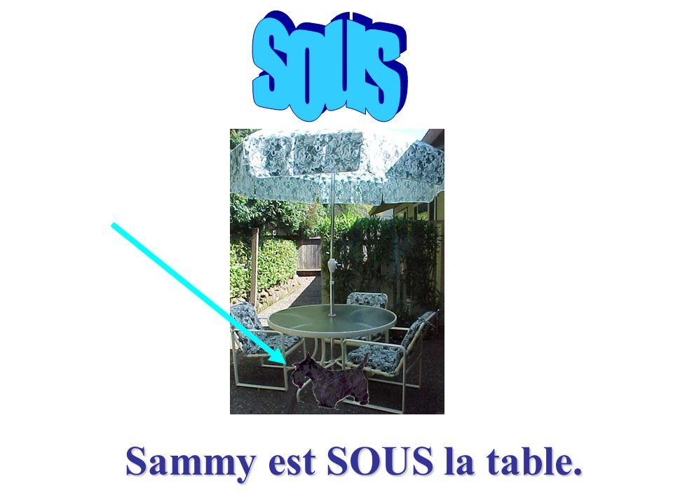 Sammy est SOUS la table.