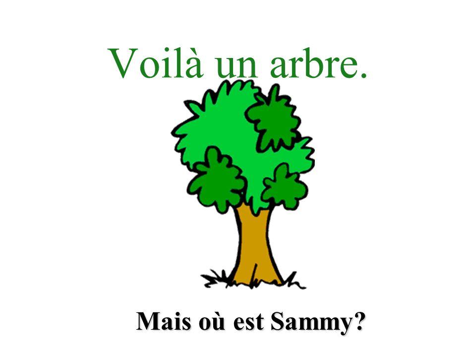 Voilà un arbre. Mais où est Sammy?