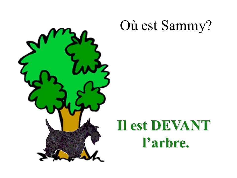 Où est Sammy? Il est DEVANT larbre. larbre.