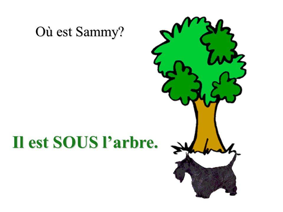 Où est Sammy? Il est SOUS larbre.