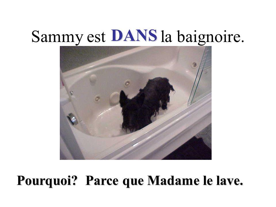 Sammy est la baignoire. DANS Pourquoi? Parce que Madame le lave.