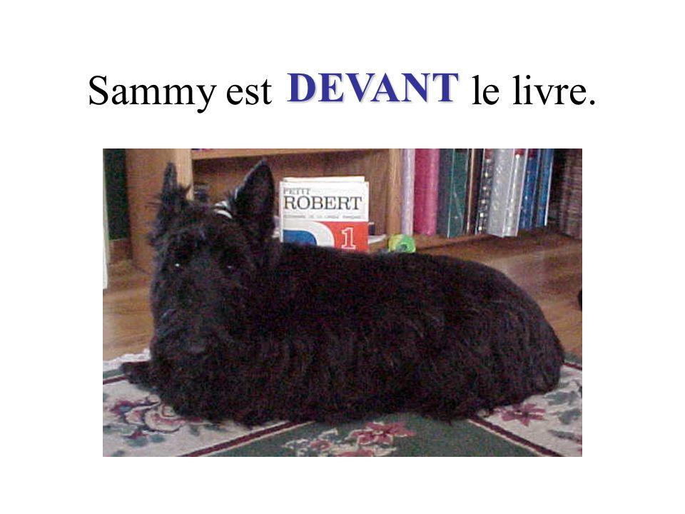 Sammy est le livre. DEVANT