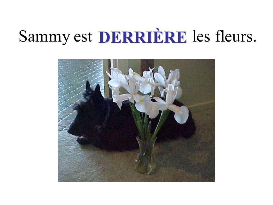 Sammy est les fleurs. DERRIÈRE