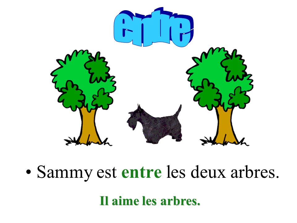 Sammy est entre les deux arbres. Il aime les arbres.
