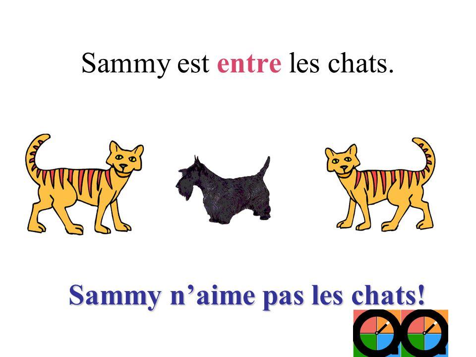 Sammy est entre les chats. Sammy naime pas les chats!