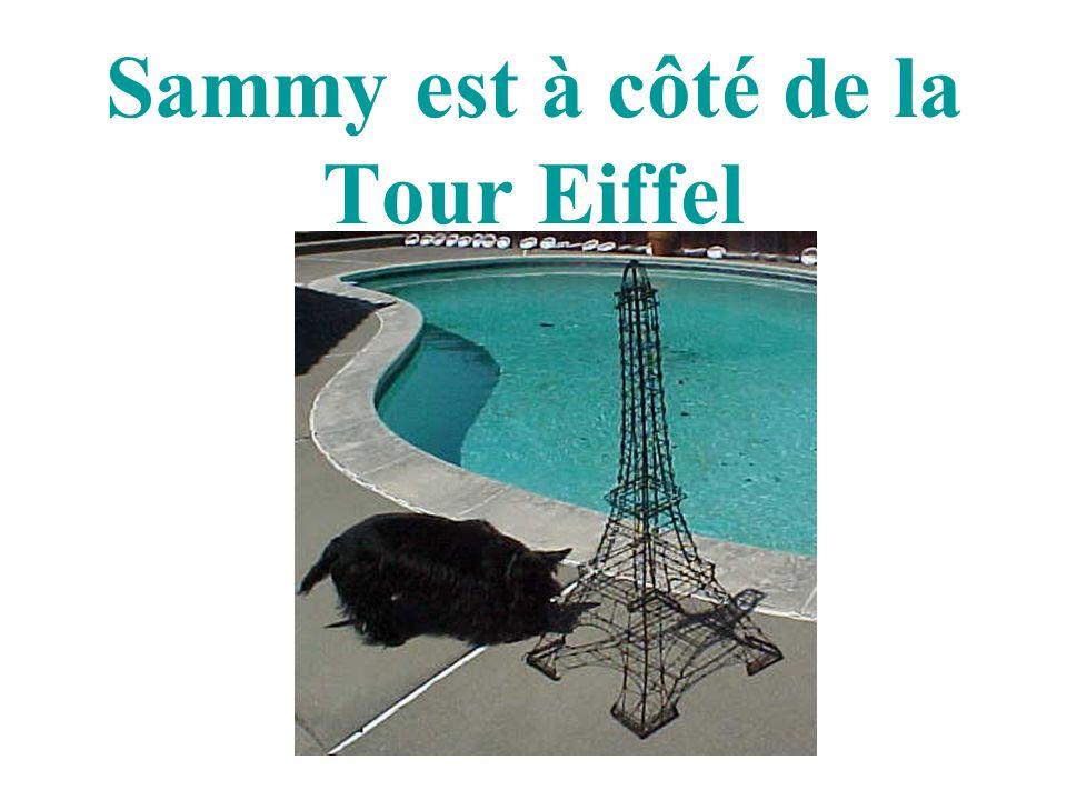Sammy est à côté de la Tour Eiffel