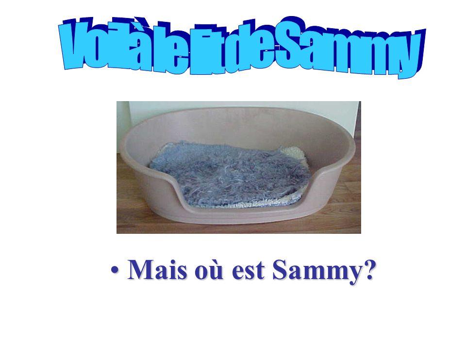 Mais où est Sammy?Mais où est Sammy?
