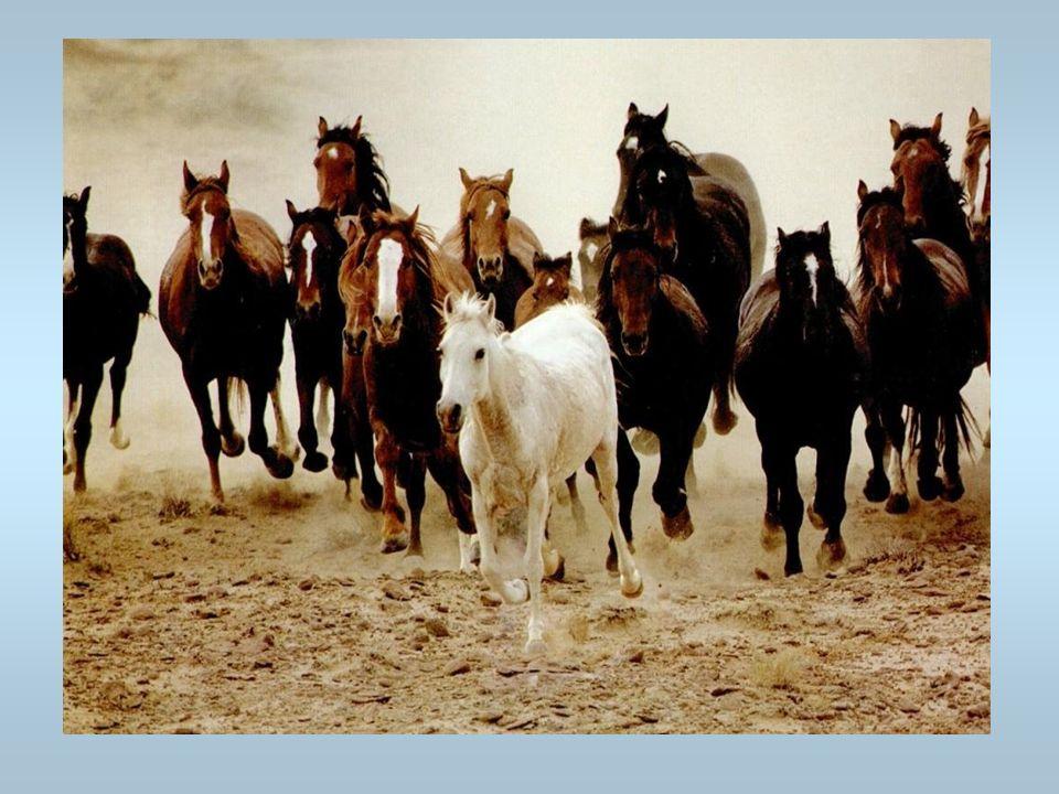 Des chevaux Cest un troupeau de chevaux
