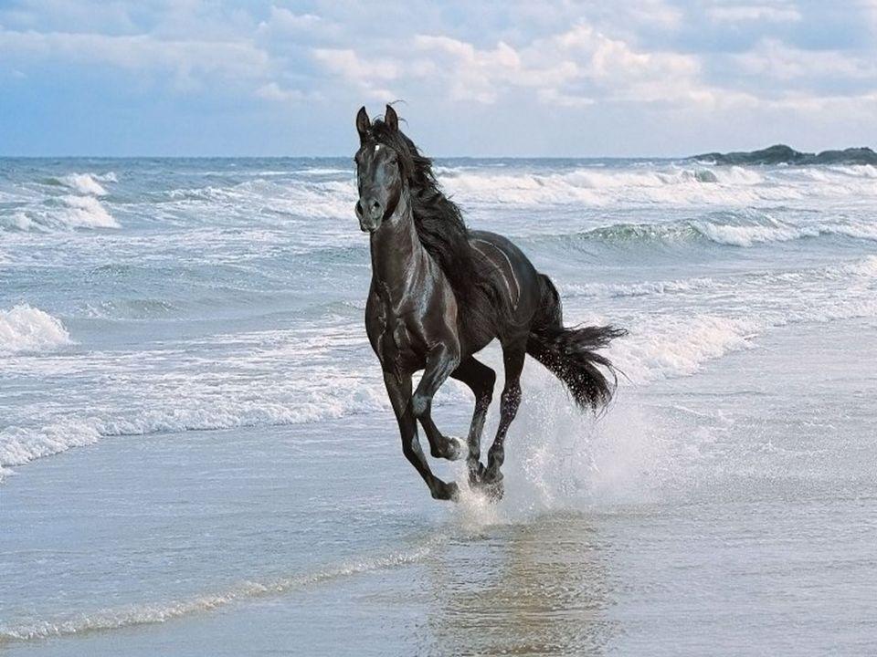 Un cheval Le cheval galope sur la plage