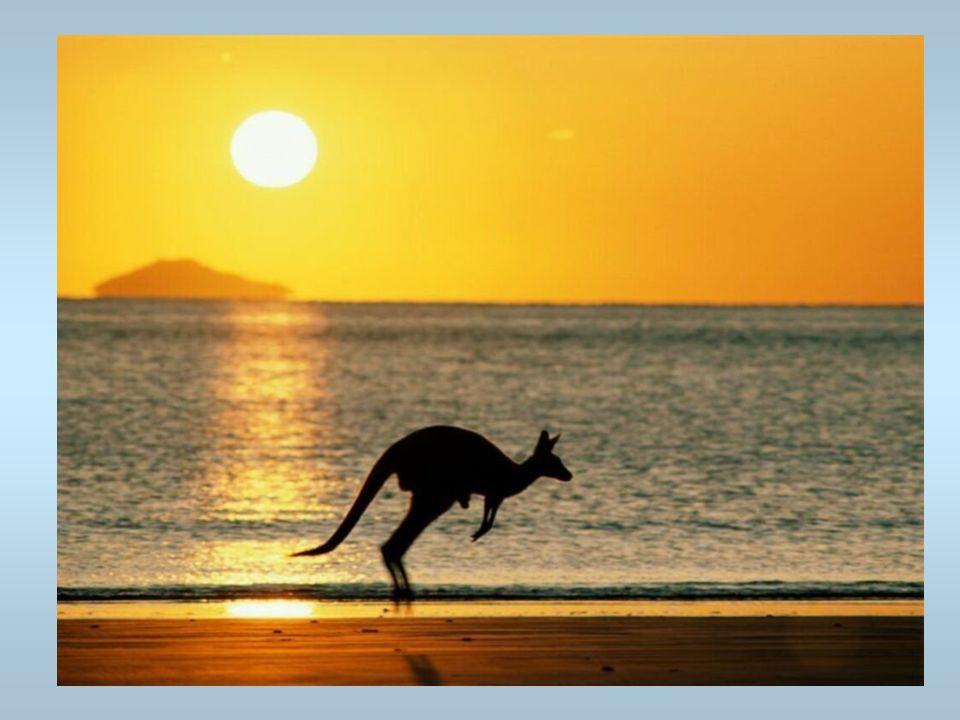 Un kangourou Ils vivent en Australie