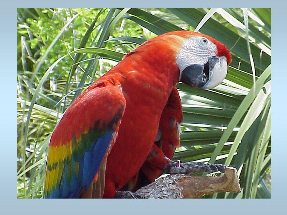 Un perroquet Cest un oiseau